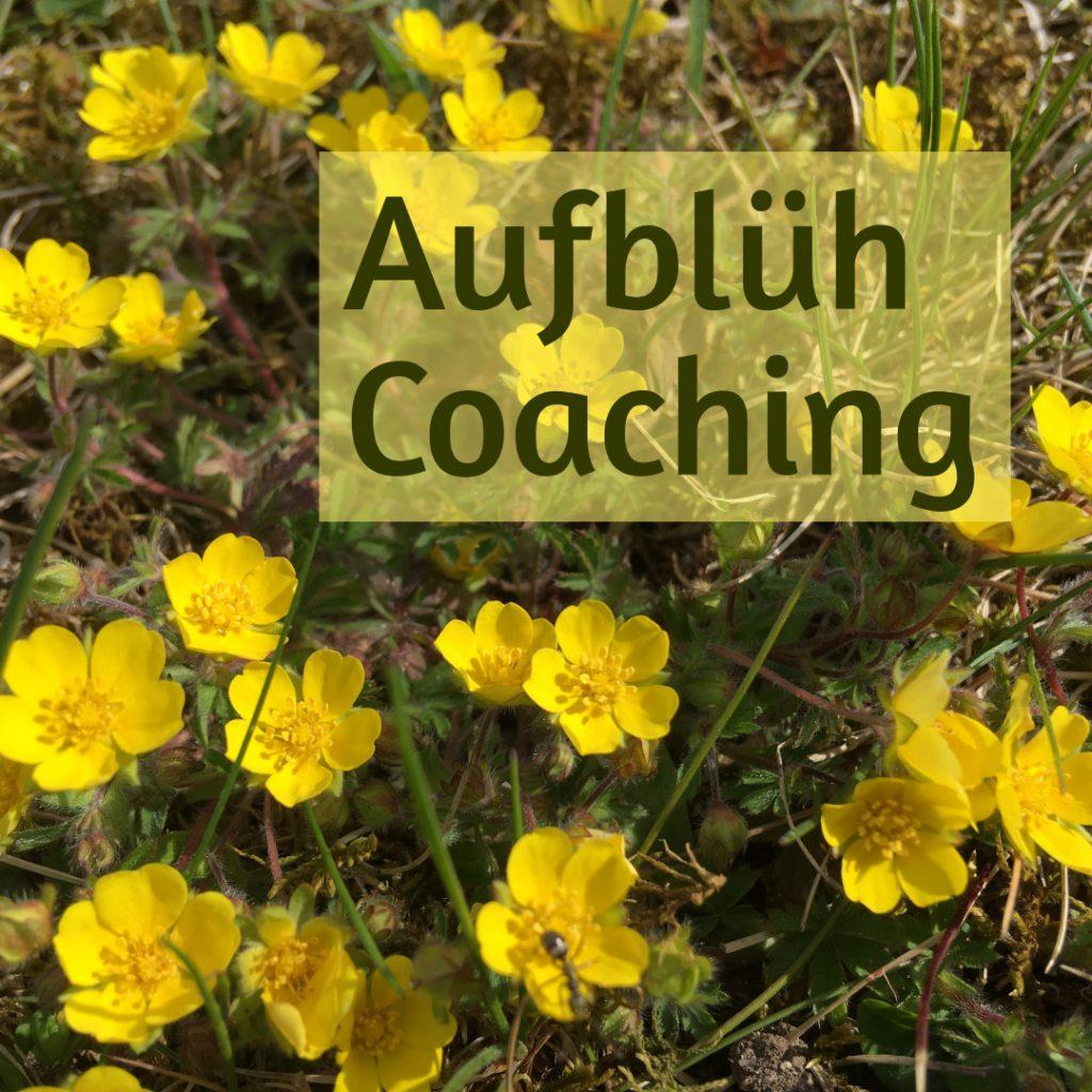 gelbe Blumen, Text AufblühCoaching