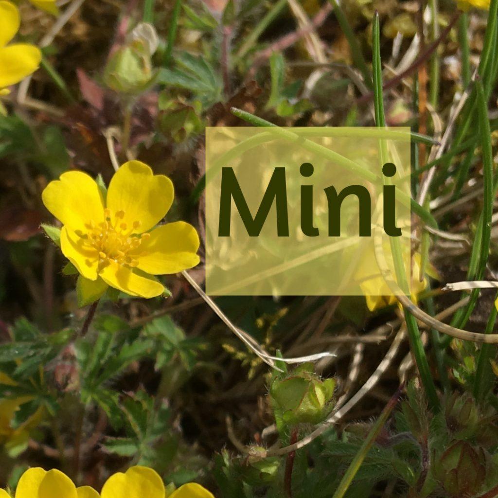 """1 gelbe Blüte. Text """"Mini"""""""